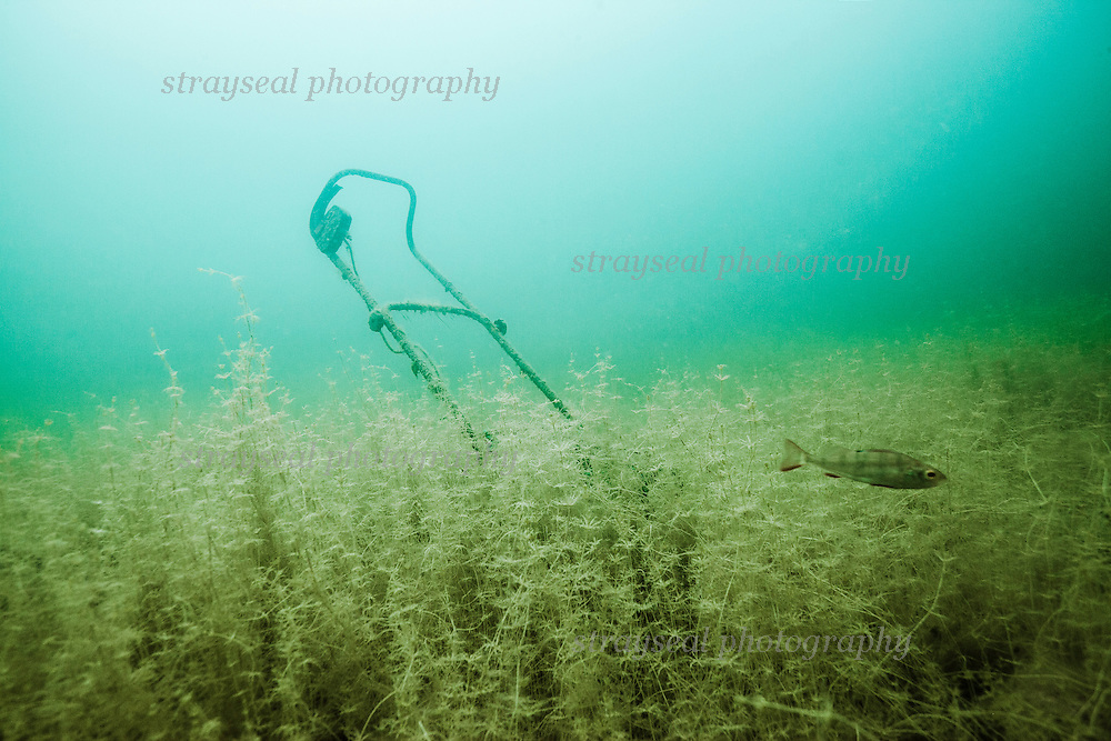 Underwater Grass Cutting