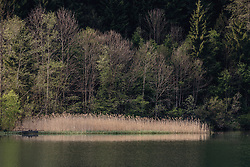 THEMENBILD - Schilf am Rande des Klammsee, aufgenommen am 02. Mai 2019, Kaprun, Österreich // Reed at the edge of the Klammsee on 2019/05/02, Kaprun, Austria. EXPA Pictures © 2019, PhotoCredit: EXPA/ Stefanie Oberhauser