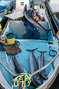 Fish Market<br /> Puerto Ayora, Santa Cruz Island<br /> Galapagos<br /> Ecuador, South America
