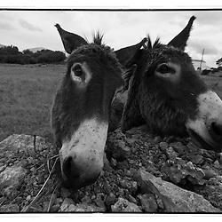 Black and white print of 2 Catalan Buros in Mallorca.