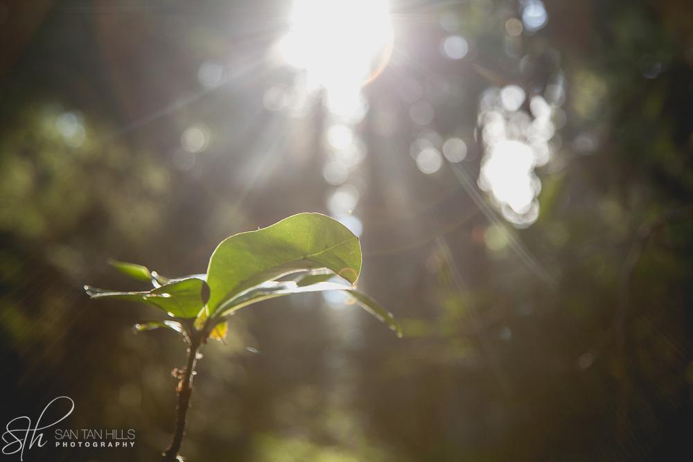 Ray of sunlight - Point Defiance Park, Tacoma, WA
