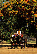 Image of a horse and buggy ride on Duke of Gloucester Street in Colonial Williamsburg, Virginia, east coast