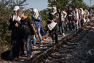 Gevgelija, Macedonia - A group of refugees and migrants on their way to the Gevgelijas train station, minutes after they have crossed the Greek - Macedonian border, on the 23rd of August 2015. Thousands of refugees (mostly coming from Syria) and migrants try every day to cross the Greek border to Macedonia (Fyrom), hoping to continue their journey to Central/North Europe and eventualy reach countries like Germany, Great Britain and Sweden.