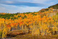 PHENOMENAL 2016 FALL- ROUTT COUNTY- BUFFALO PASS- STEAMBOAT SPRINGS, COLORADO