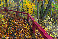 Autumn leaves near Anderson Falls on Fall Fork of Clifty Creek in autumn near Newbern, Indiana, USA