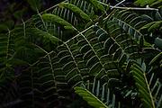 Sao Goncalo do Rio Preto_MG, Brasil...Parque Estadual do Rio Preto, em Sao Goncalo do Rio Preto, Minas Gerais. Na foto detalhe de uma planta...The Rio Preto State Park, in Sao Goncalo do Rio Preto, Minas Gerais. In this photo a plant...Foto: LEO DRUMOND / NITRO