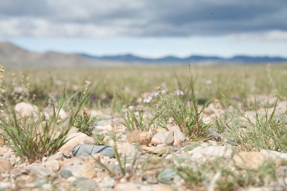Olgii Province in Western Mongolia.