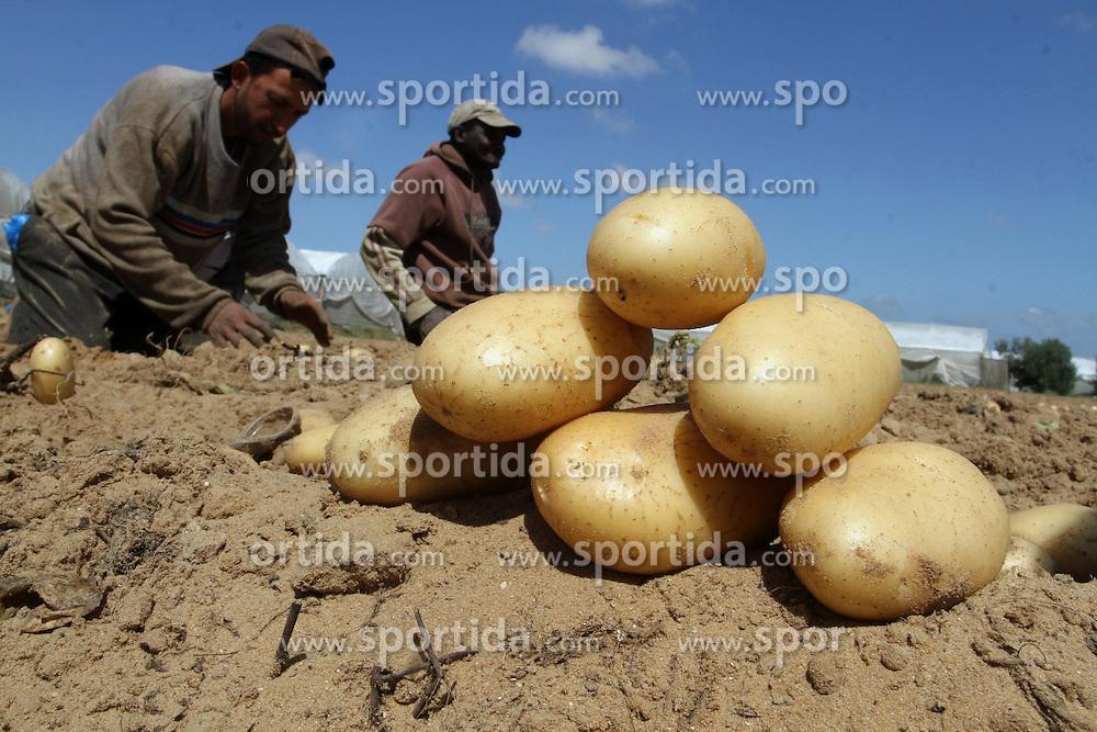 30.04.2015, Rafah, PSE, Kartoffel Ernte in Pal&auml;stina, im Bild Bauern und Arbeiter bei der Kartoffel Ernte auf einem Feld // Palestinian farmers harvest the potatoes crop, in Rafah in the southern Gaza strip, Palestine on 2015/04/30. EXPA Pictures &copy; 2015, PhotoCredit: EXPA/ APAimages/ Abed Rahim Khatib<br /> <br /> *****ATTENTION - for AUT, GER, SUI, ITA, POL, CRO, SRB only*****