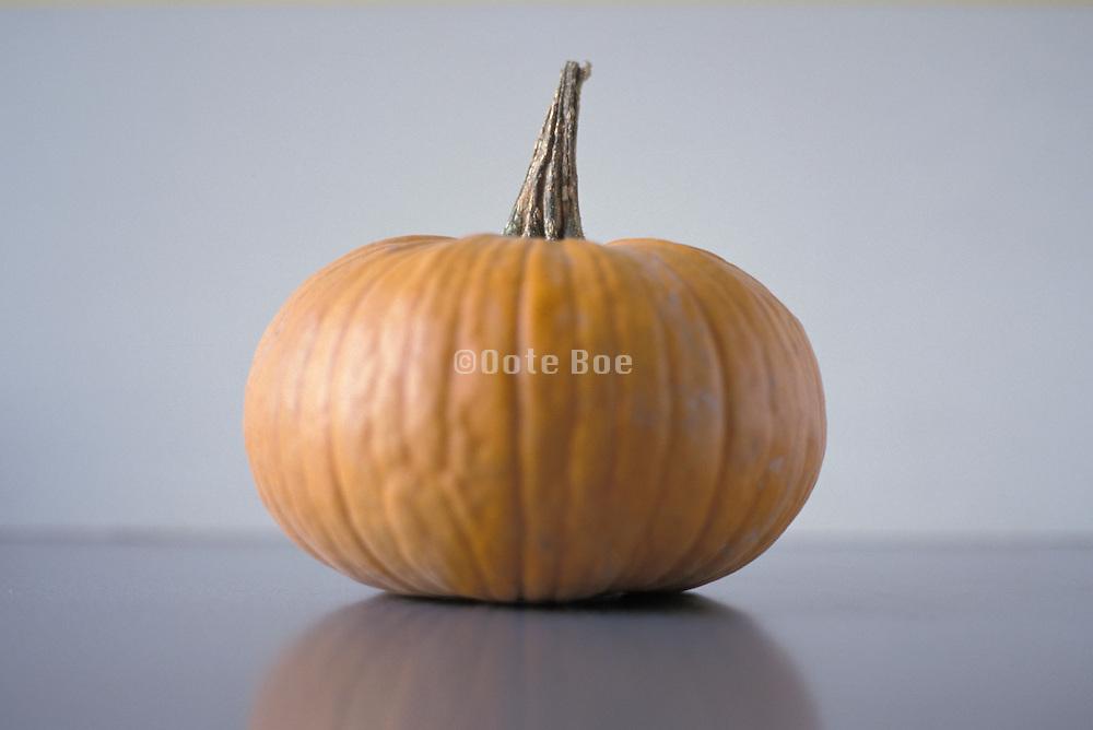 still life of pumpkin