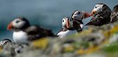 Fauna - Birds : Seabirds