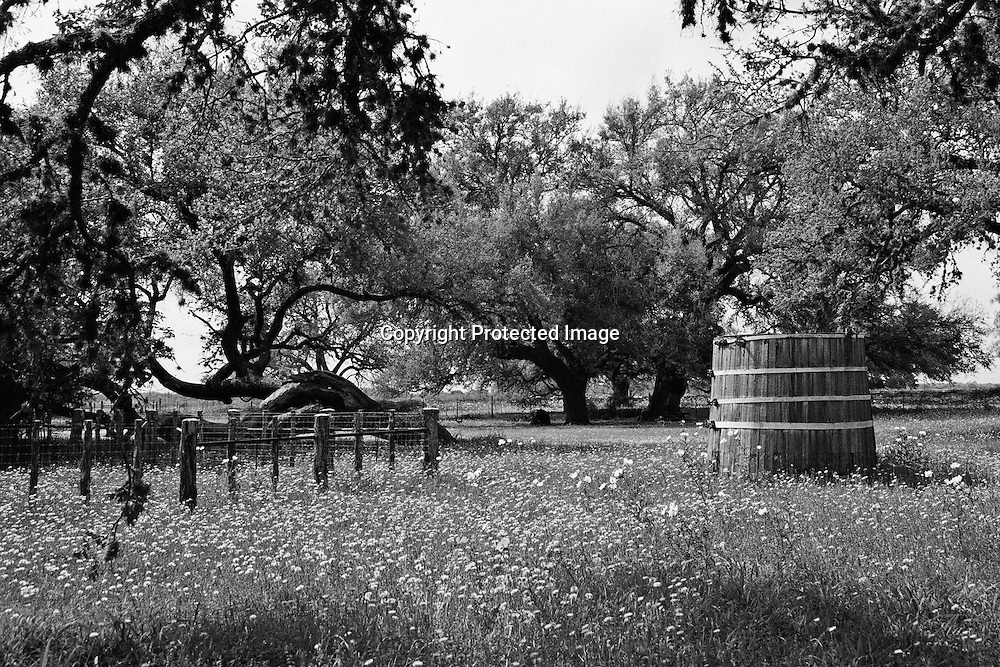"Rural scene in Central Texas with wooden water tank and large leaning oak tree. NOTE: Click ""Shopping Cart"" icon for available sizes and prices. If a ""Purchase this image"" screen opens, click arrow on it. Doing so does not constitute making a purchase. To purchase, additional steps are required."
