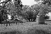"""Rural scene in Central Texas with wooden water tank and large leaning oak tree. NOTE: Click """"Shopping Cart"""" icon for available sizes and prices. If a """"Purchase this image"""" screen opens, click arrow on it. Doing so does not constitute making a purchase. To purchase, additional steps are required."""
