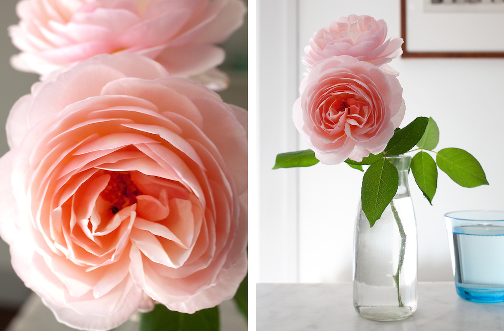 Garden Roses In the Home