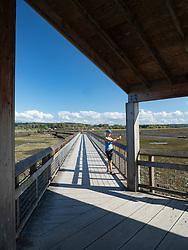 United States, Washignton, Billy Frank Jr. Nisqually National Wildlife Refuge
