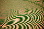 An aerial view of hay cut and drying in an alfalfa field