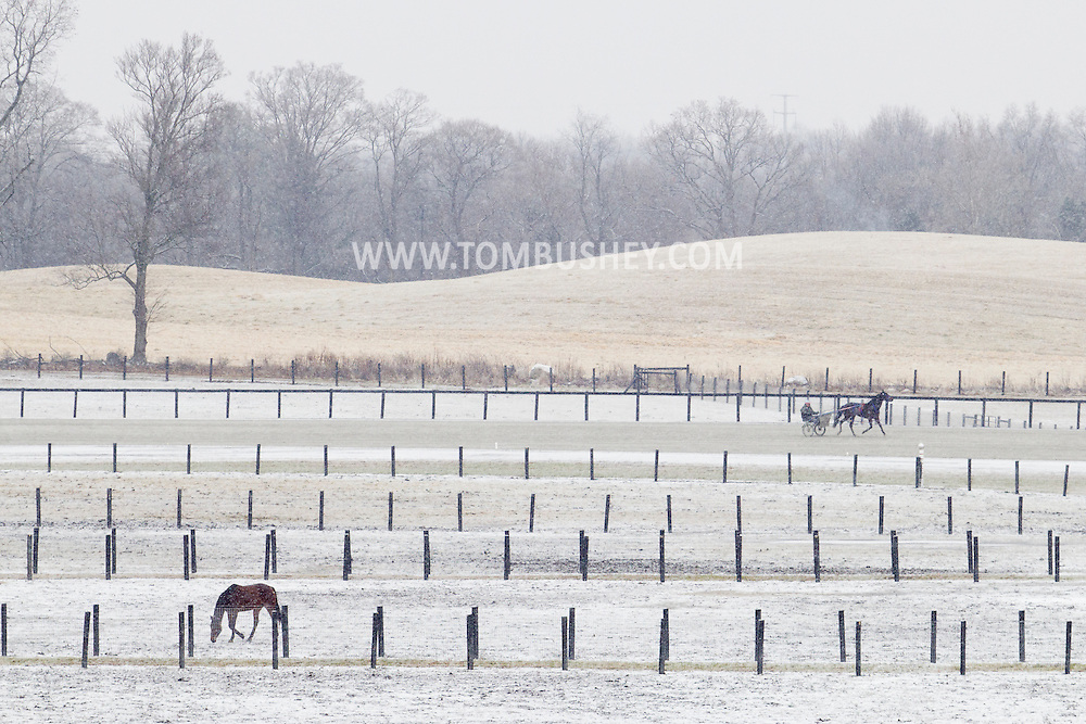 Town of Wallkill, New York - Harness racing horses at the Mark Ford Training Center on Dec.10, 2013.
