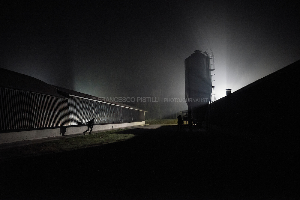 An animal-rights activist during a night-investigation into an egg-laying  factory in Northern italy.