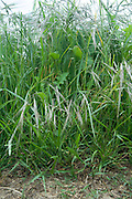 close up of various wild grasses