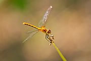 Dragonfly on Gaudry's Road<br />