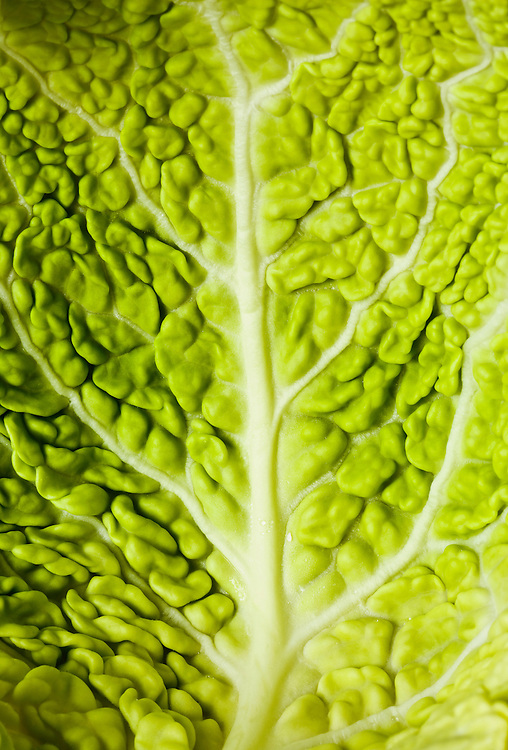 Close-updetail of cabbage