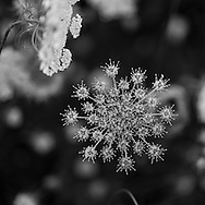 http://Duncan.co/flower-burst