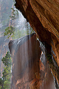 A small waterfall tumbles off Lady Mountain in Zion National Park, Utah. The waterfall eventually pours into Lower Emerald Pool.