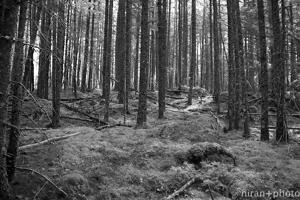 Grassy Pond Trail, Katahdin