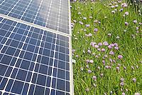 24 MAY 2005, BERLIN/GERMANY:<br /> Solaranlage auf dem Dach des Willy-Brandt-Hauses<br /> IMAGE: 20050524-01-020<br /> KEYWORDS: Photovoltaik, Sonnenenergie, Solarenergie, Umwelt, environment, Energie, Strom, Blumen, flowers, wiese, Dachbegruenung, Dachbegrünung