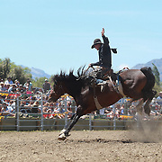 Paul Robinson from Palmerston in action during the Open Saddle Bronc at the Wanaka Rodeo. Wanaka, South Island, New Zealand. 2nd January 2012