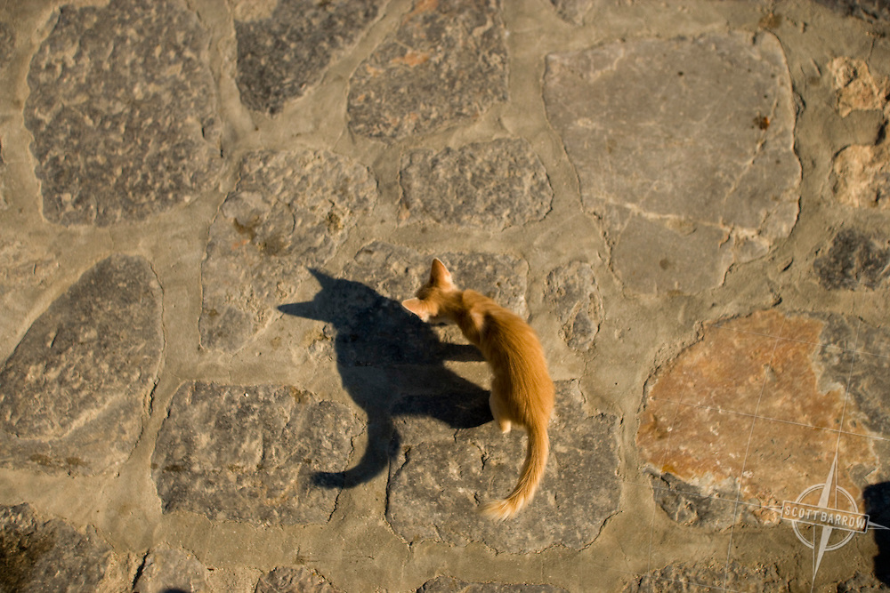 Kitten playing with shadow on rocks, Hydra, Greece.