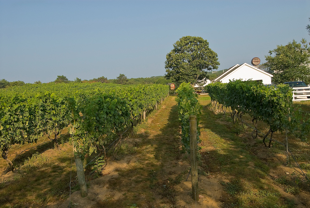 Massachusetts, Truro, Truro Vineyards, Cape Cod