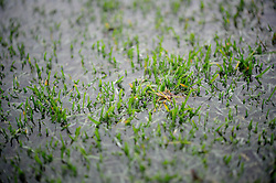 Waterlogged pitch at the Memorial Stadium - Photo mandatory by-line: Dougie Allward/JMP - Tel: Mobile: 07966 386802 22/12/2012 - SPORT - FOOTBALL - Memorial Stadium - Bristol -  Bristol Rovers v Rotherham United- League 2.