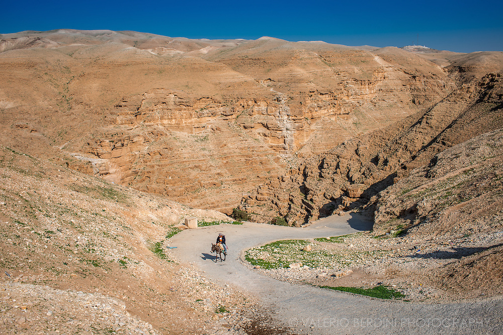 A palestinian man rides his donkey uphill a canyon in the West Bank, near the ancient Monastery of St. George. Donkeys are still extensively used because of their strenght and versatility.