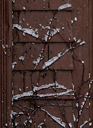 Snow's sign language?  Fresh snow on branches near U.D.
