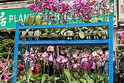Exotic orchids on display at the Mong Kok Flower Market of Kowloon, Hong Kong.