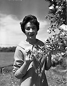1959 rose of tralee