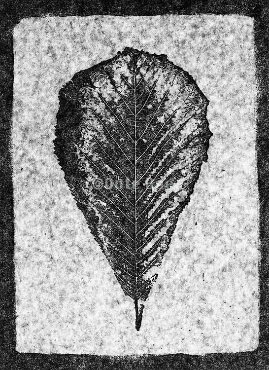 A composite with a pressed leaf.