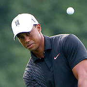 23 August 2012:   Tiger Woods (USA) watches his chip shot during the first round of The Barclays Championship for The FedEx Cup played at Bethpage Black in Farmingdale, NewYork.