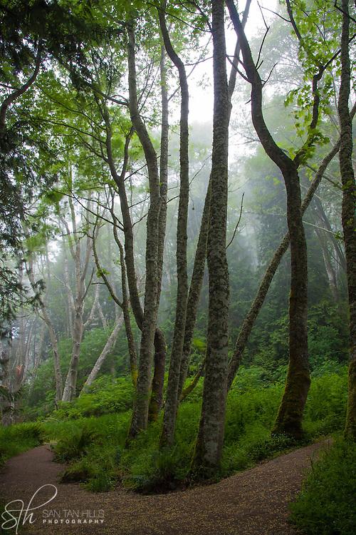 A trail through the trees - Port Angeles, WA