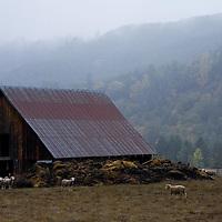 Ranch/Farm/Barn