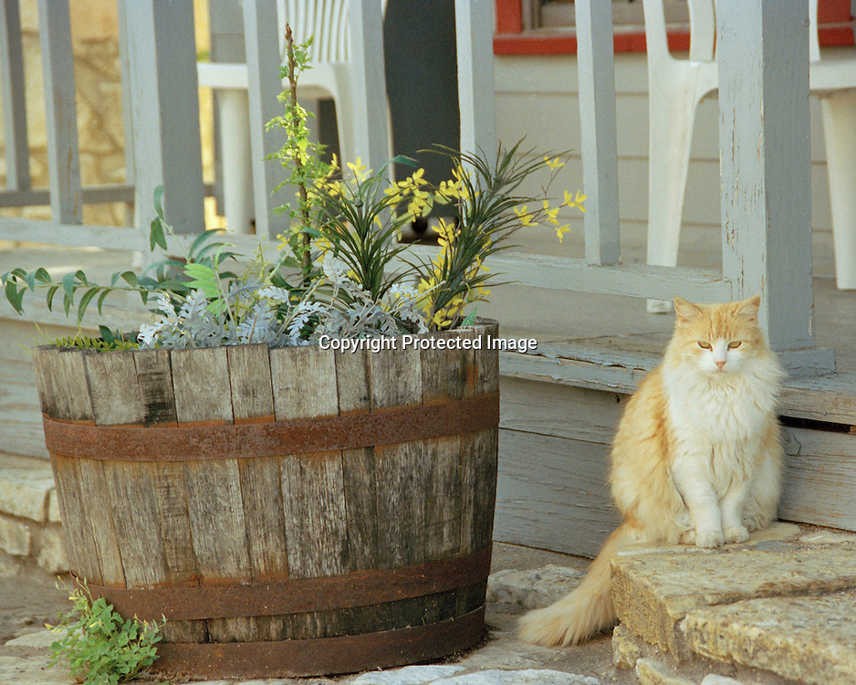 "Cat poses on a porch in Columbus, Texas. NOTE: Click ""Shopping Cart"" icon for available sizes and prices. If a ""Purchase this image"" screen opens, click arrow on it. Doing so does not constitute making a purchase. To purchase, additional steps are required."