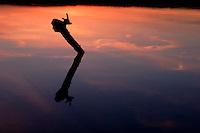Saganashkee Slough Reflection at Sunset, Willowbrook, Illinois