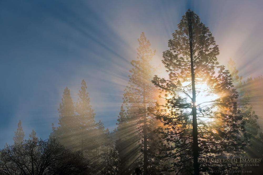 Sunlight through trees and mist, Yosemite Valley, Yosemite National Park, California