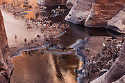 A surprising Oasis In The Chad<br /> <br /> Guelta d'Archei is an oasis, or rather a guelta, in the heart of the Sahara desert. A guelta is a peculiar type of wetland, typical of desert regions, formed when underground water in lowland depressions spills to the surface and creates permanent pools and reservoirs. Guelta d'Archei is located in the Ennedi Plateau, in north-eastern Chad, hidden behind a canyon. Its waters sheltered by the towering sandstone cliffs typical of this region. Everyday, hundreds of camels are herded into the knee deep water of the guelta by passing caravans for them to drink and rest. Dung from thousands of camels excreted over hundreds of years have turned the water black.<br /> <br /> Lurking in the black waters is a small group of surviving Nile crocodiles, a vestige of a wetter time when this species once thrived across most of today's Sahara desert and in swamps and rivers along South Mediterranean shores. Guelta d'Archei represents one of the last remaining colonies of the Nile crocodile known in the Sahara today. The crocodiles feed on fish that survive on the algae that thrive on the waters fertilized by camel droppings. Guelta d'Archei is indeed a zoological marvel.<br /> ©Boiveau Laurent/exclusivepix