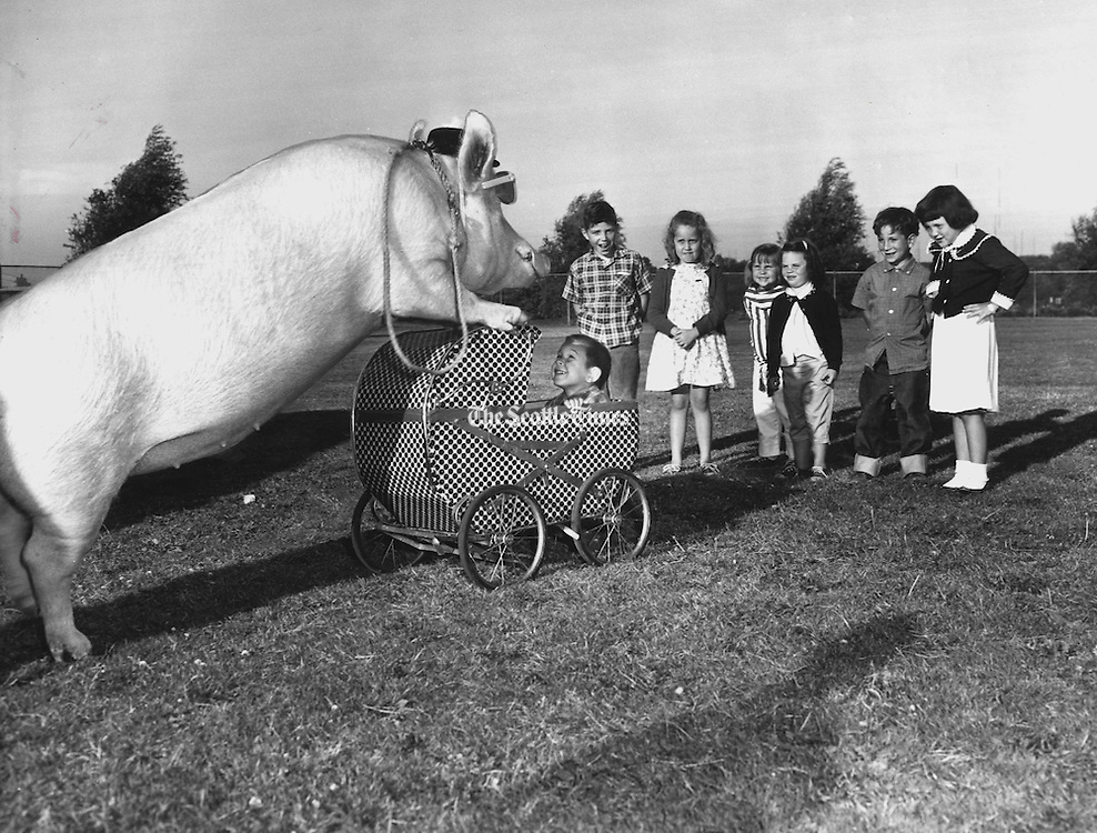 Oink, 350-pound singing pig, playfully pushed a baby carriage  at the opening of the four-day I2th annual West Seattle Hi-Yu in West Seattle Stadium in 1962.<br />