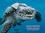 From the Introduction: <br />