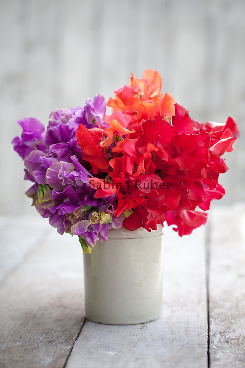 Lathyrus odoratus 'Eclipse', 'Prince of Orange' and 'Henry Thomas' - sweet pea arrangement in small earthenware jar