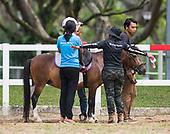 2018 - Healing Horses