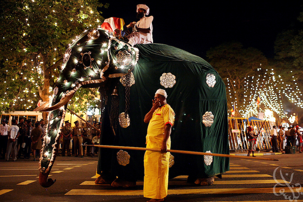 An elaborately costumed elephant marches in the Kandy Perahera outside the Temple of the Tooth (Dalada Maligawa) in Kandy, Sri Lanka August 12, 2008. The Perahera is an annual celebration in which a hundred elephants, and groups of dancers, drummers  and acrobats take part in a procession that includes a replica of the casket that contains the tooth relic.