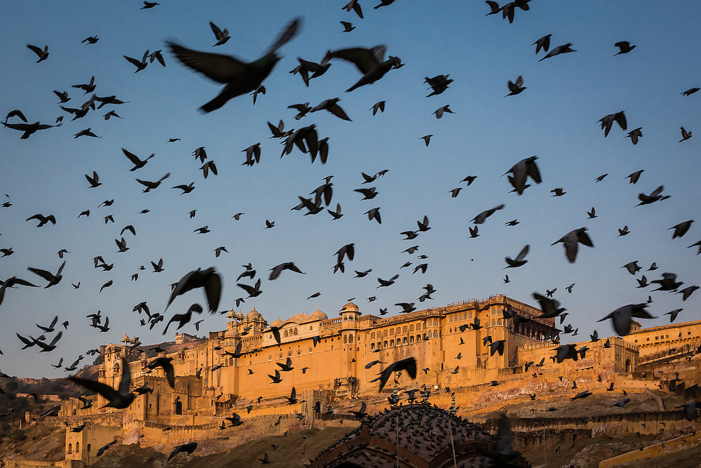 A flock of pigeons scatter near Amber Palace